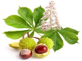 Remediu naturist Castanul salbatic